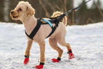 pic Freemotion rakmed Non-stop dogwear