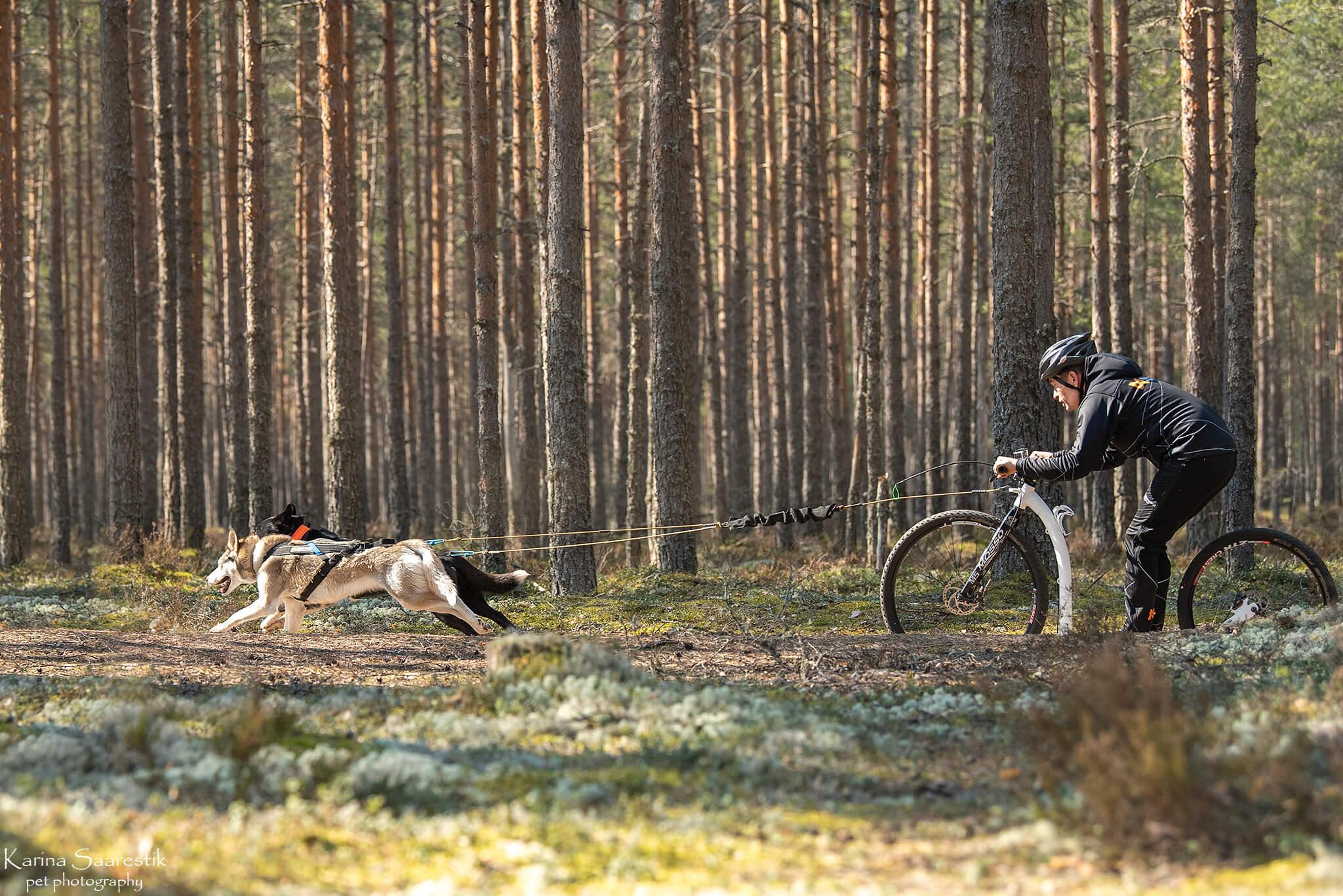 pic Richard Põldmaa Aktiivse koera laager
